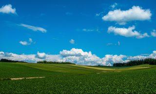 東京近郊で気軽に農業体験ができるスポット5選