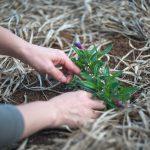 家庭菜園で自然と触れ合う!初めての方におすすめの人気野菜3選