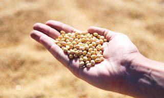 スーパー発芽大豆って実は栄養価が低い?大豆製品と比較した結果とは