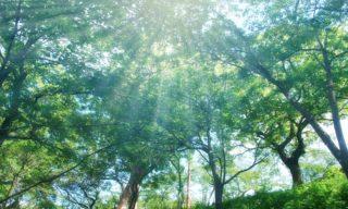 森林セラピーで心身が癒される!一度は体感したい7つの効果
