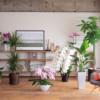 【決定版】迷ったらこれ!室内におすすめの観葉植物10選