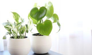 緑をもっと身近に!観葉植物がもたらす凄い7つの効果とは