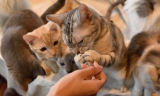 【東京】猫と触れ合って癒されよう!都内のおすすめ猫カフェ5選