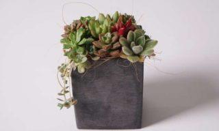 部屋に飾りたくなる!インテリア性の高いおすすめ多肉植物7選
