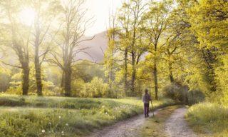 朝の散歩で気持ちの良い1日を!朝習慣に取り入れたいすごい効果