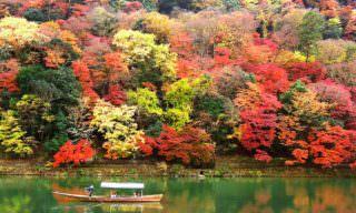東京のおすすめ紅葉バスツアー!美しい赤の絶景を満喫しよう