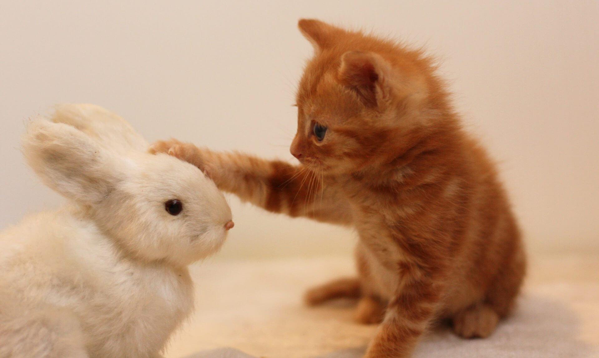 「可愛い 動物」の画像検索結果