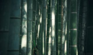 竹炭で本当に除湿できるの?簡単にできる除湿効果を高める方法も!