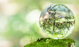 苔テラリウムのおすすめキット6選。自分だけの世界を作ってみよう!