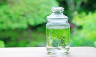 ボトルアクアリウム瓶の6つの選び方。参考になる秀逸なレイアウト集も