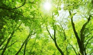森林浴の8つの効果がすごい!持続時間や注意点などを知って体験しよう