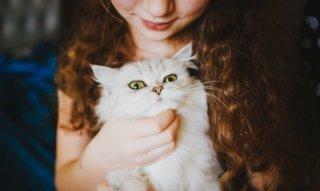 【画像あり】猫の8つの癒し効果が絶大!猫にほっこり癒されよう